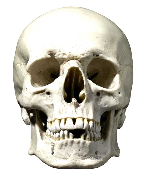 Skull Halloween Face Mask