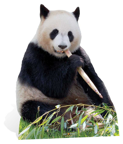 Giant Panda Cardboard Cutout