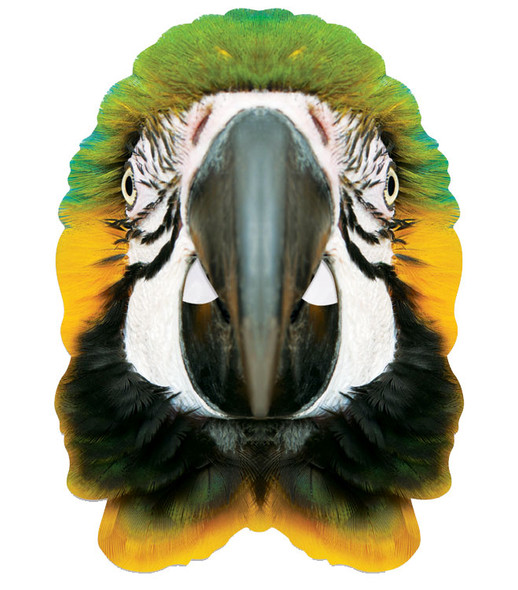Parrot Animal Single 2D Card Party Face Mask