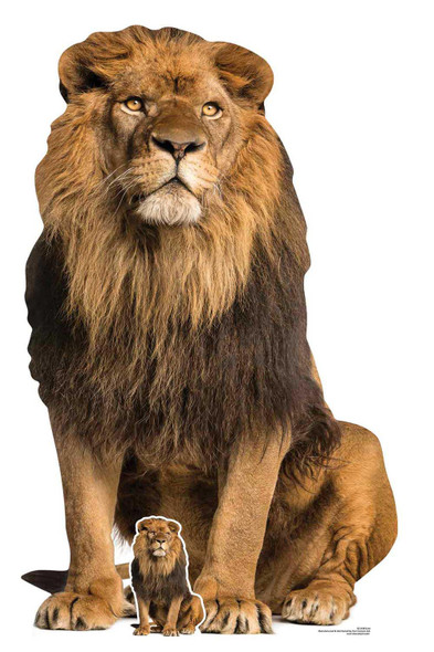 Lion Big Cat Lifesize Cardboard Cutout / Standup / Standee