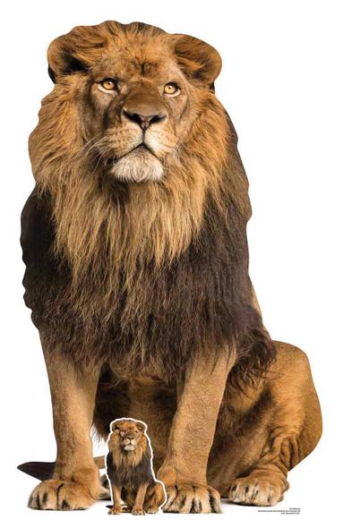 Lion Big Cat Lifesize Cardboard Cutout / Standup / Standee