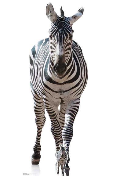 Zebra Lifesize Cardboard Cutout / Standup / Standee