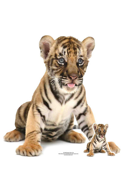 Bengal Tiger Cub Lifesize Cardboard Cutout / Standup / Standee