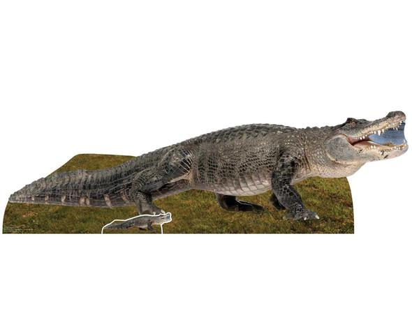 American Alligator Cardboard Cutout / Standup