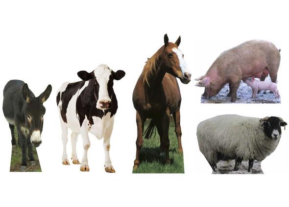 Farmyard Animal Collection Lifesize Cardboard Cutouts Set of 5
