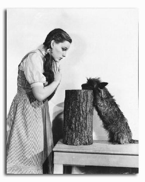 (SS2227030) Judy Garland  The Wizard of Oz Movie Photo