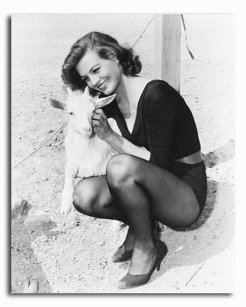 (SS2318641) Angie Dickinson Movie Photo