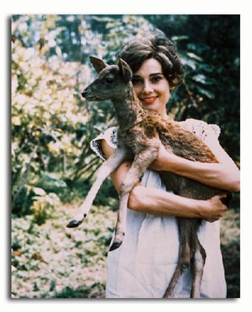 (SS3131570) Audrey Hepburn Movie Photo