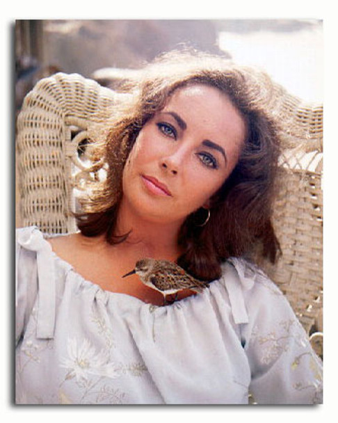 (SS3228459) Elizabeth Taylor Movie Photo