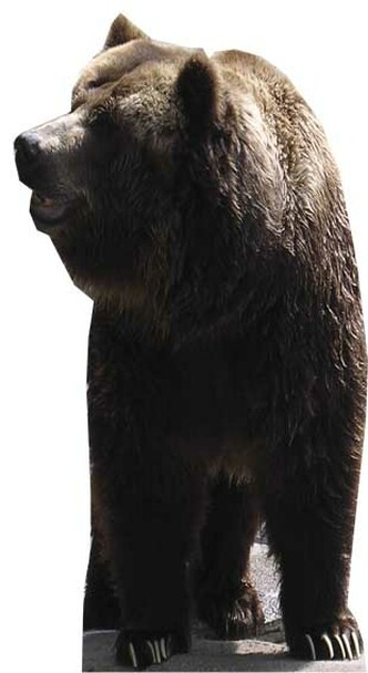 Bear - Lifesize Cardboard Cutout / Standee