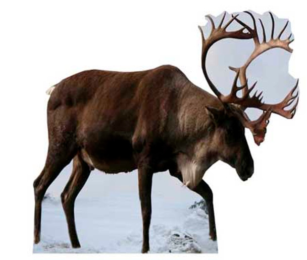Reindeer - Lifesize Cardboard Cutout / Standee