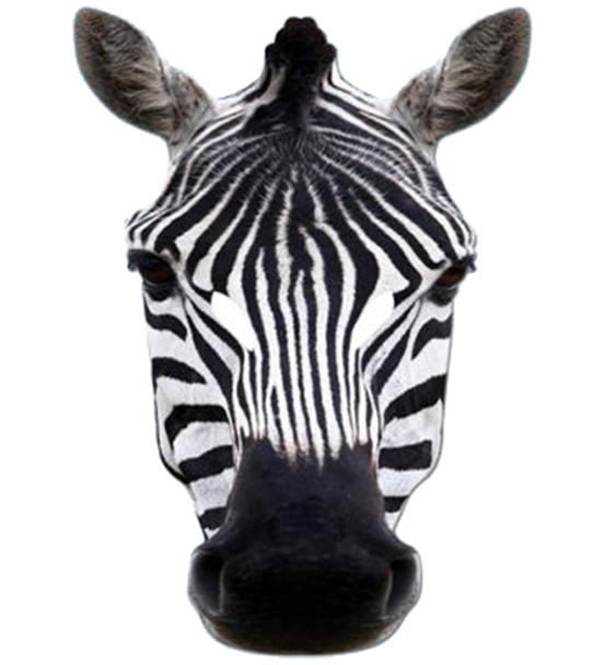 Zebra Animal Card Party Face Mask