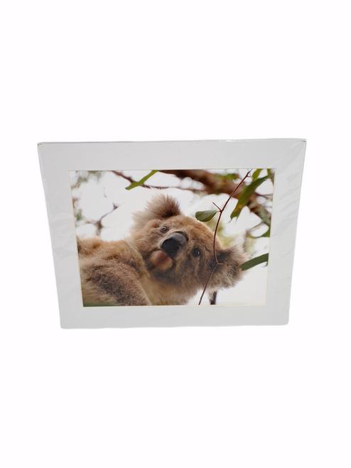 Tansy McAleer - Australian Animal Prints