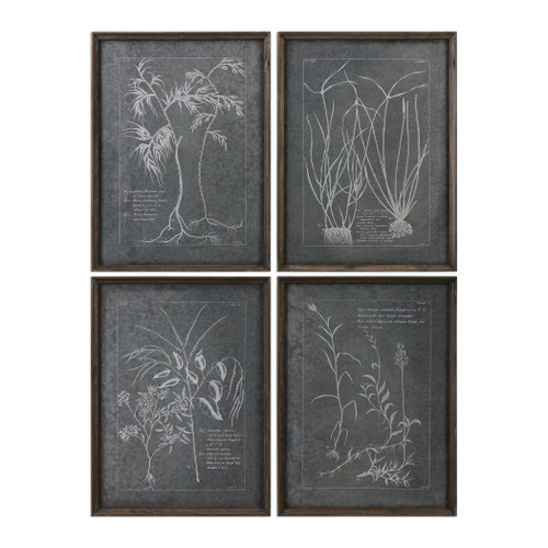 Uttermost Root Study Print Art S/4 by Grace Feyock