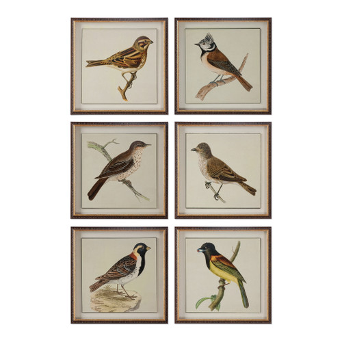 Uttermost Spring Soldiers Bird Prints, S/6 by Grace Feyock