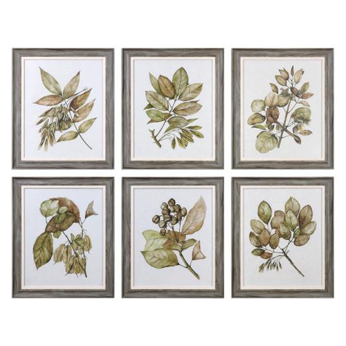 Uttermost Seedlings Framed Prints S/6 by Grace Feyock