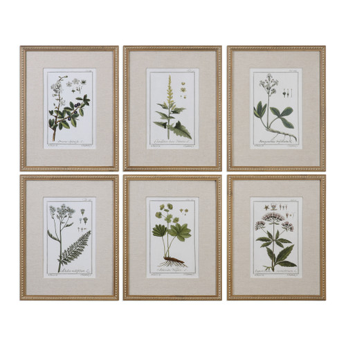 Uttermost Green Floral Botanical Study Prints S/6 by Grace Feyock