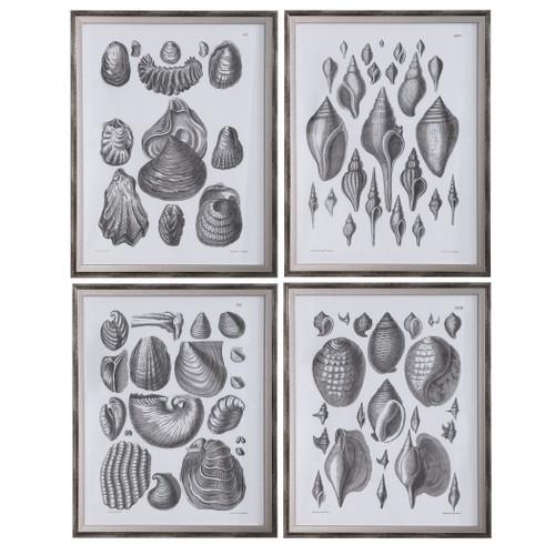Uttermost Marine Study Framed Prints, Set/4 by Grace Feyock