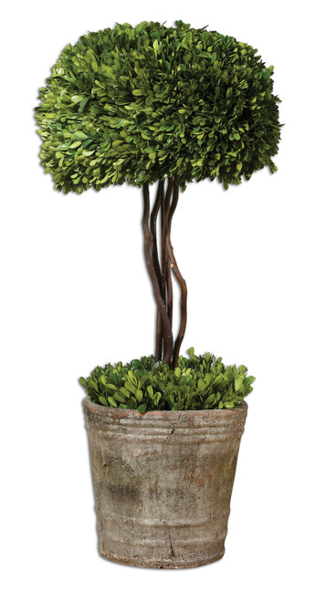 Uttermost Tree Topiary Preserved Boxwood by Constance Lael-Linyard
