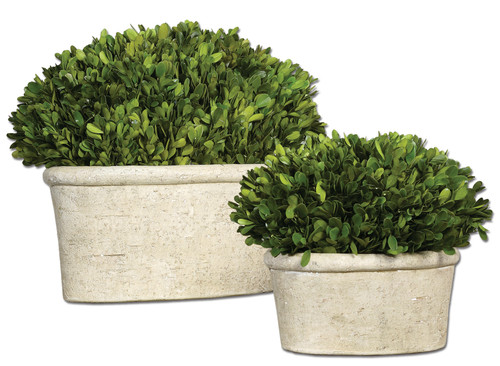 Uttermost Oval Domes Preserved Boxwood Set/2 by Constance Lael-Linyard