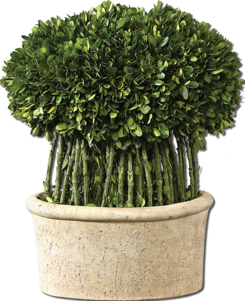 Uttermost Willow Topiary Preserved Boxwood by Constance Lael-Linyard