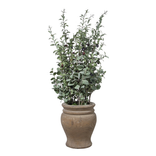Uttermost Tassos Potted Olive by Constance Lael-Linyard