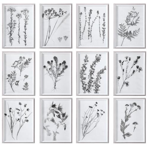 Uttermost Contemporary Botanicals Framed Prints, S/12