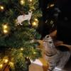 Personalised Bengal Cat Decoration