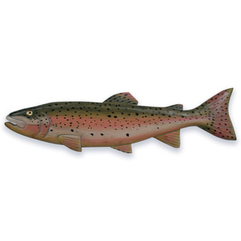 Rainbow Trout Wall