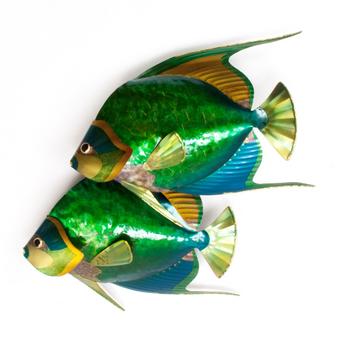 Queen Angelfish Pair CO139