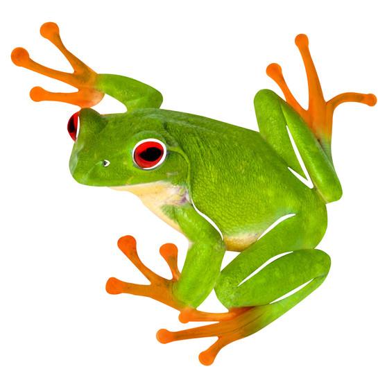 Fancy Frog Refraxions Wall Art