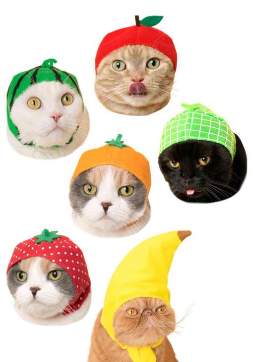 Cat Cap Fruit Blind Box