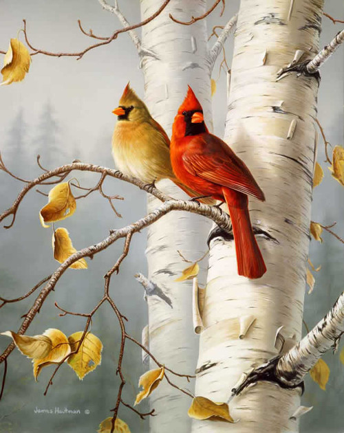 Cardinals West Virginia State Bird Artwork Micro Fiber Cleaning Cloth