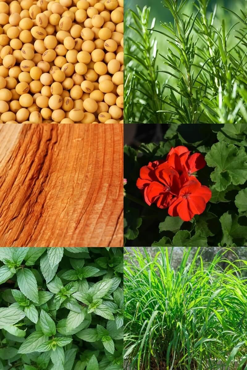Bug Botanist product ingredients