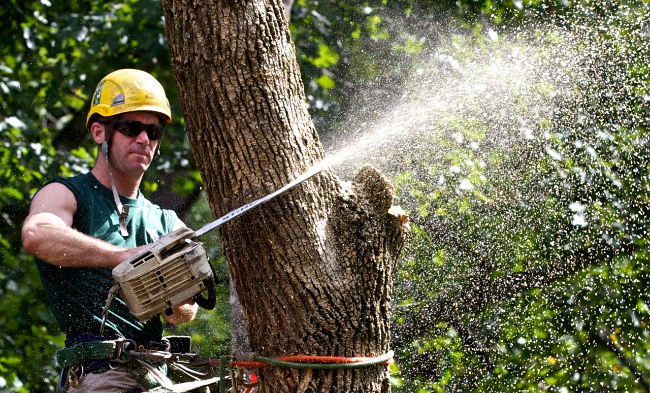 Tree Work Gets Its Own Category Online