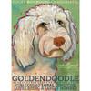 Ursula Dodge Goldendoodle