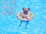 Hot Weather, Heat Stroke and Keeping Your Pup Safe