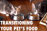 Transitioning Your Pet's Food