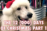 The 12 (Dog) Days of Christmas Part 1