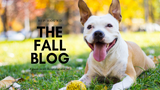The Fall Blog