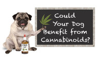 The Amazing Benefits of CBD for Pets
