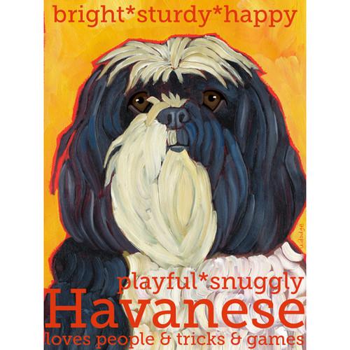 Ursula Dodge Havanese