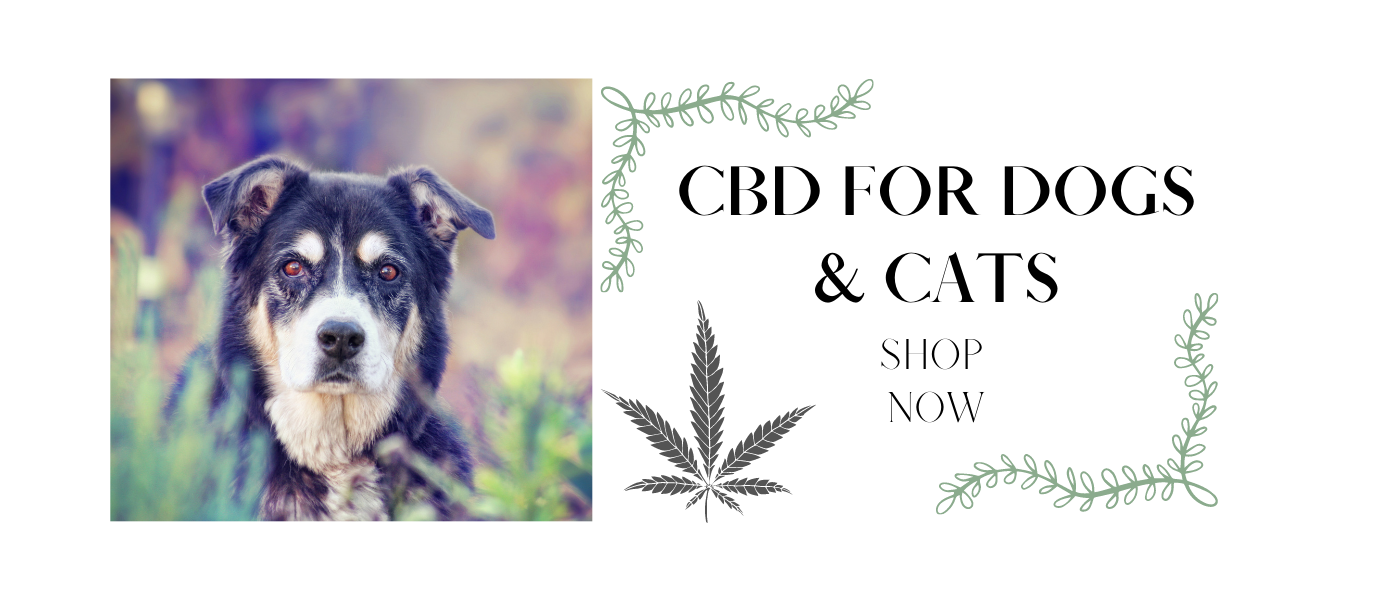Shop CBD for Dogs and Cats