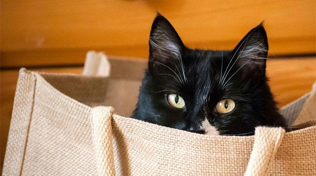 Cat Shop - Shop Now