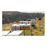 Egmont Honey Manuka Honey UMF15+