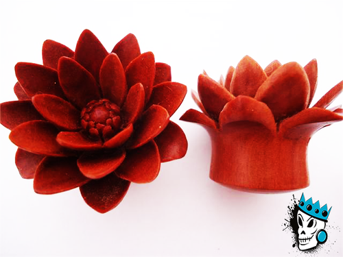 Sabo Wood Water Lily Plugs