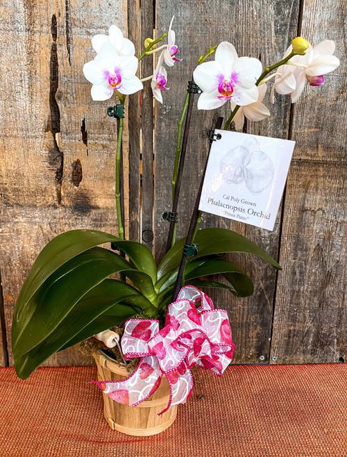 Orchid in Bushel