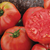 Tomato Spectacular Online ordering begins April 17 at 9am
