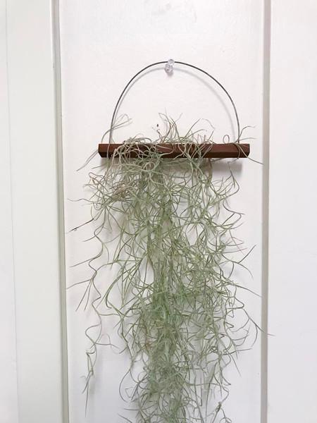 Spanish Moss Hanger