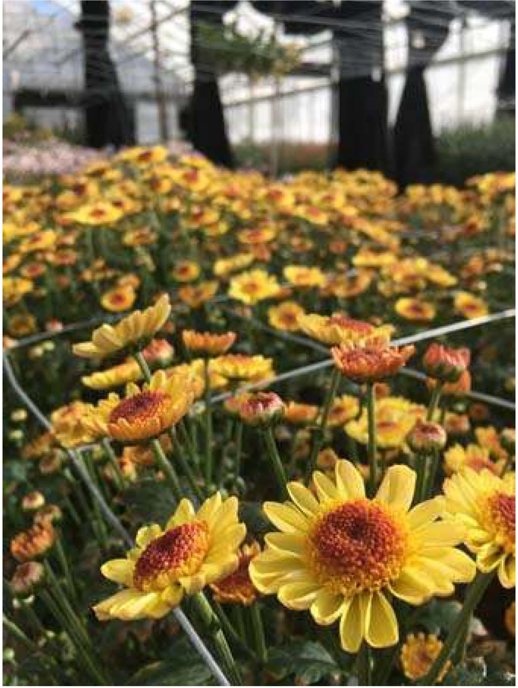 cut-flowers.jpg